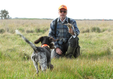 Higgins Gundogs Training